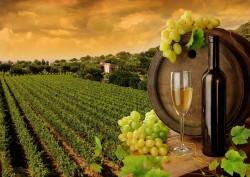 vinogradnik-vo-sne