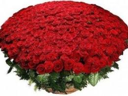 Buket krasnyh roz 1000 i odna noch.300x300