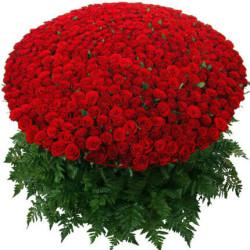 1000-roses
